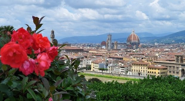 panorama su Firenze con rosa in primo piano