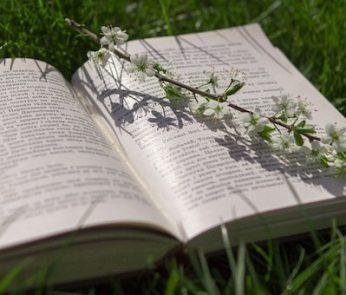Libri su prato con ramoscello di fiori